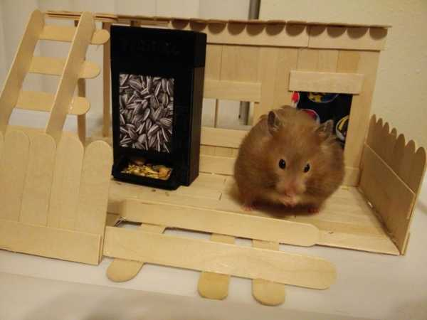 Hamster Otomatı (Suriye Hamster Boyutlandırıcı) Plastik Aparat