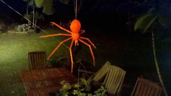 Ürpertici örümcek ağı  Süs Eşyası Hediyelik Dekor Biblo