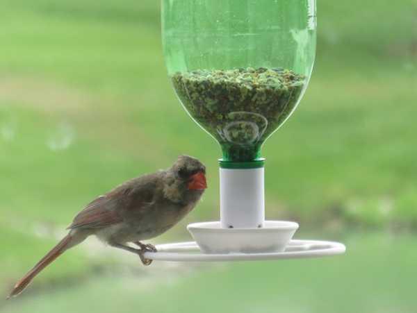 Kuş Yem Otomatik Verme Aparatı Kümes Kuş Bakım Eşyası