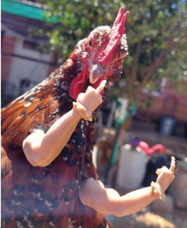 Tavuk Parmaklari Plastik Aparat